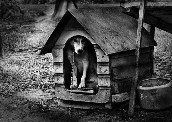 What To Consider Before Purchasing a Doghouse