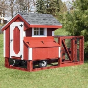 Chicken Coops for Sale in MA NH