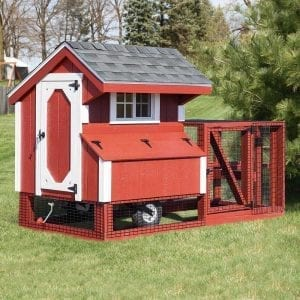 Big Chicken Coops MA NH